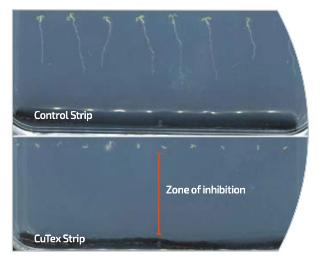 Testing image showing the effectiveness of copper root barrier