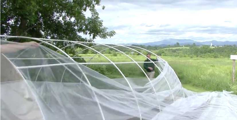 Image of greenhouse plastic being installed.