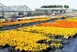 Black Ground Cover landscape fabric under flowers at a nursery
